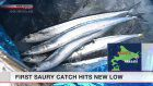 Pacific saury catch in Hokkaido very small