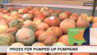 Giant pumpkin contest held ahead of Halloween