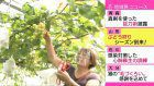 Grape orchard in Yamagata opens for tourists