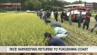 Rice harvested in Fukushima's tsunami-hit area