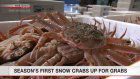 Season's 1st snow crabs auctioned in Tottori