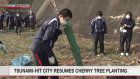 Tsunami-hit city resumes cherry tree planting