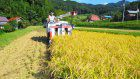 Domestic policy framework: Abe wants farmers on side for 2016