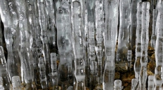 'Ice bamboo shoots' reach for the ceiling in Hokkaido cave