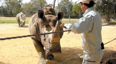 White rhinos find refuge in Aichi following rescue by park rangers