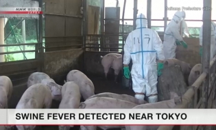 800 pigs culled as swine fever detected near Tokyo
